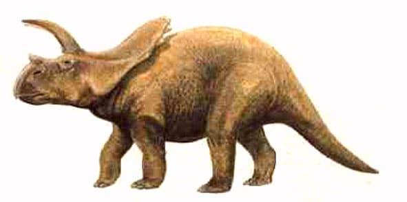 arrhinoceratops.