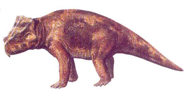 bagaceratops.