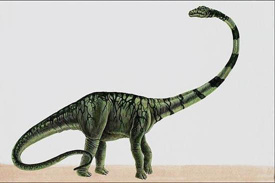 barosaurus.