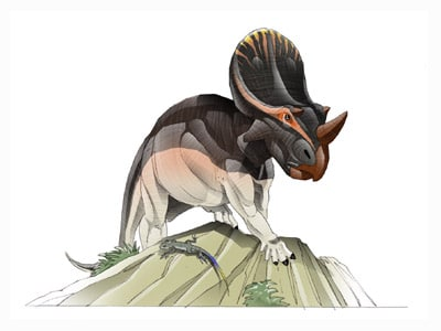 brachyceratops.