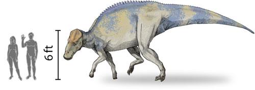 Dessindebrachylophosaurus.