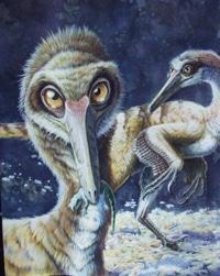 Dinosaure Buitreraptor.