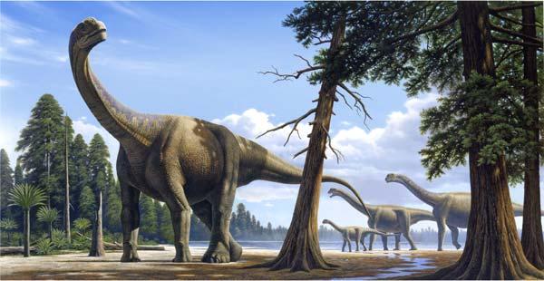 Camarasaurus.