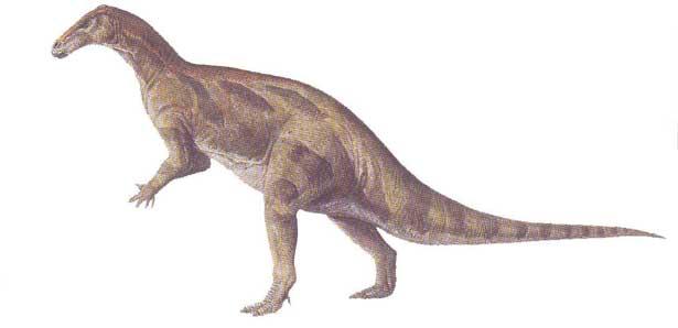 camptosaurus.