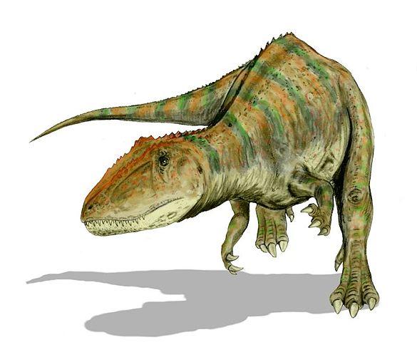 Carcharodontosaure.