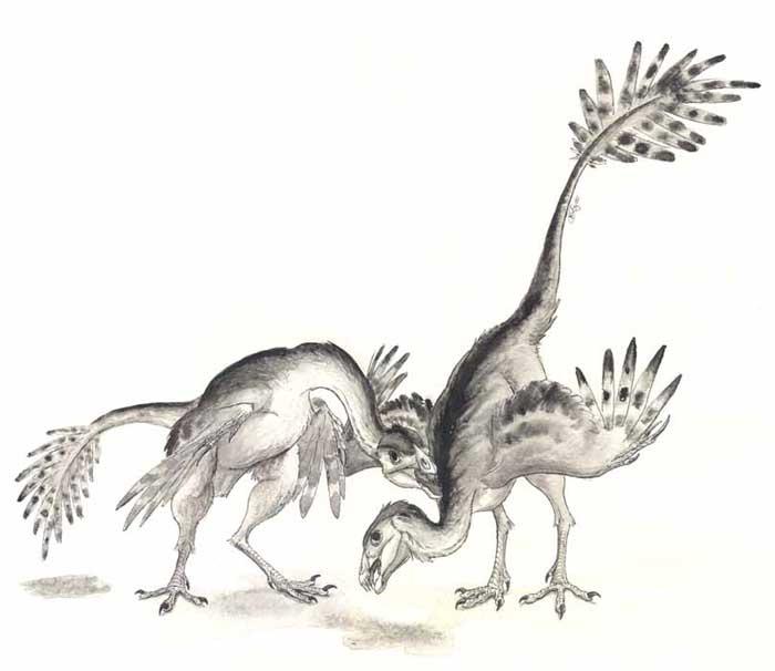 caudipteryx.