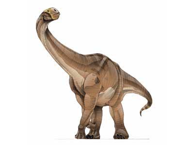cetiosaurus.