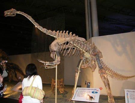 Squelette fossilisé de Deinocheirus.