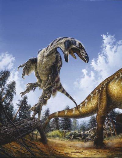 Le dinosaure Deinonychus.