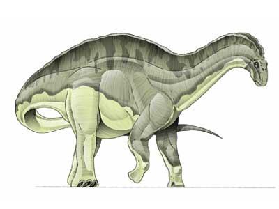 dicraeosaurus.