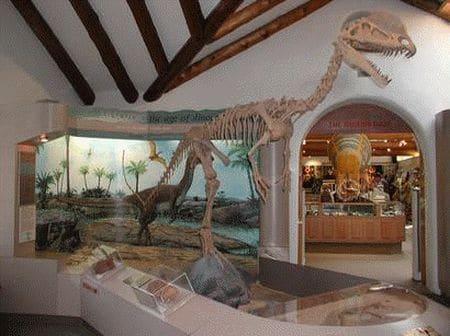 Fossiles de Dilophosaurus.