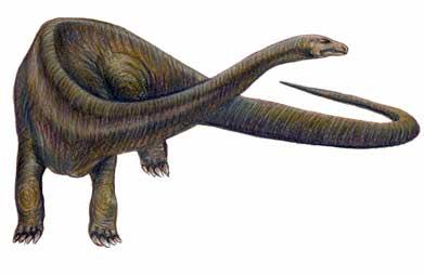 Diplodocus article sur ce dinosaure - Dinosaure diplodocus ...