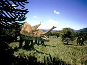 Des dinosaures Diplodocus. Des dinosaures ont-ils survécu à la chute de la météorite ?