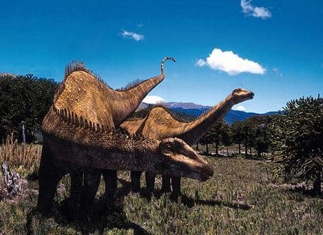 Troupeau de Diplodocus.