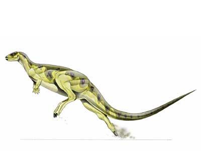 dryosaurus.