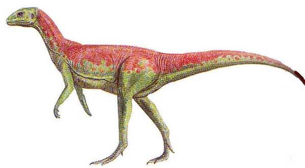echinodon.
