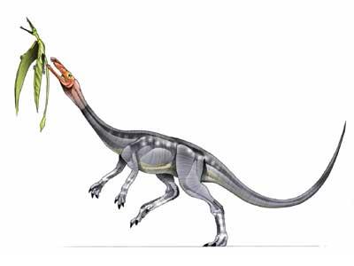 elaphrosaurus.