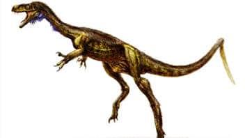 Eodromaeus.