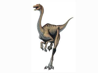 Dinosaure Gallimimus.