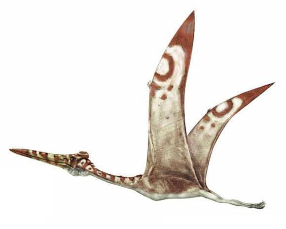 Hatzegopteryx.