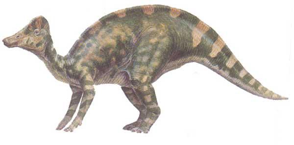 hypacrosaurus.