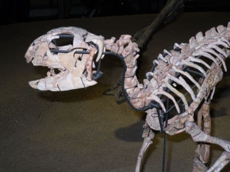 Fossile d'Hypsilophodon.