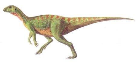 Le dinosaure Hypilophodon.