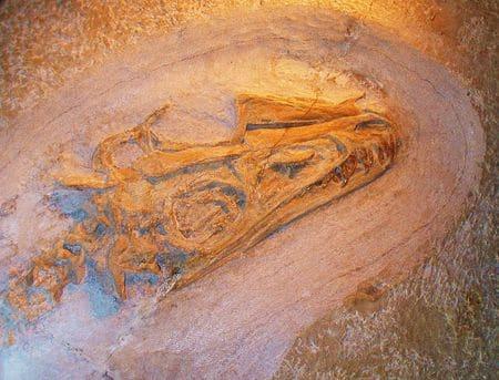 Fossile de Juravenator.