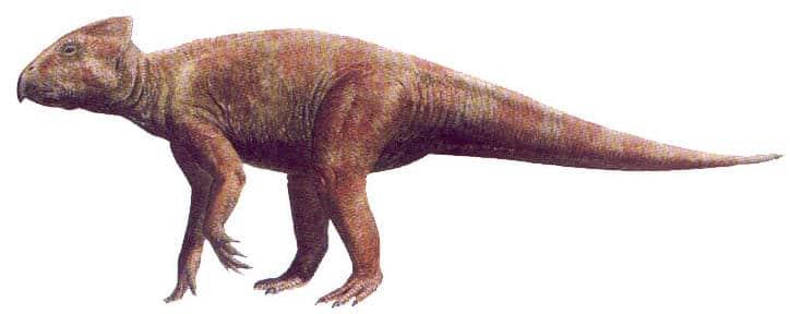 leptoceratops.