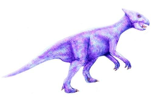 liaoceratops.