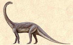 Massospondylus.