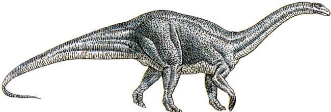 Le dinosaure Melanorosaurus.