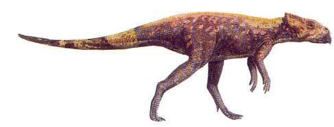 Dinosaure Microceratus.