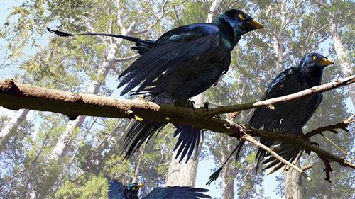 Reconstitution scientifique moderne de Microraptor, avec des plumes noires.
