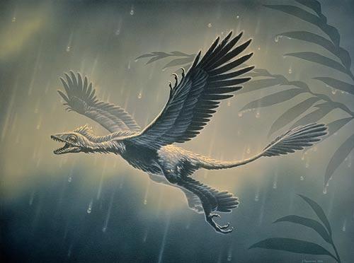 Microraptor en vol.