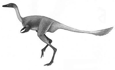 Le dinosaure Mononykus.