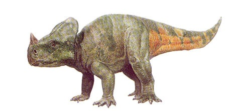 Le dinosaure Montanoceratops.