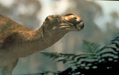 Muttaburrasaurus.