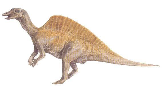 ouranosaurus.