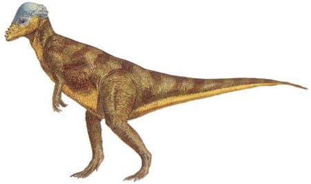Dinosaure Pachycephalosaurus.