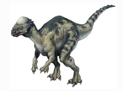 Pachycephalosaurus pachycephalosaure article sur ce dinosaure - Dinosaure de jurassic park ...