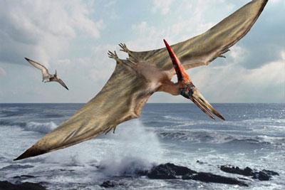 Le Ptérosaure Pterodactylus (Ptérodactyle).