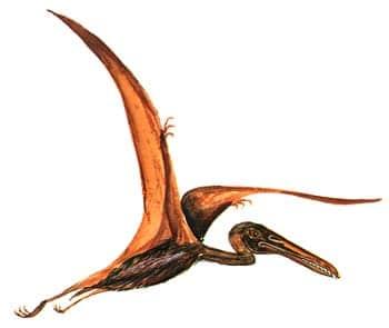 Pterodactyle.
