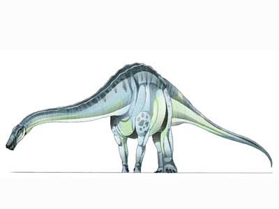 quaesitosaurus.