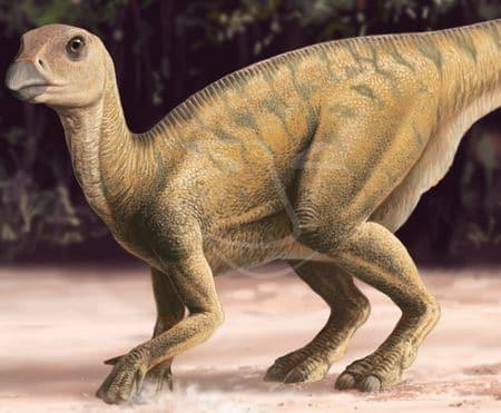 Dinosaure Rhabdodon : il figure parmi les découvertes de fossiles du XIXème siècle en France.