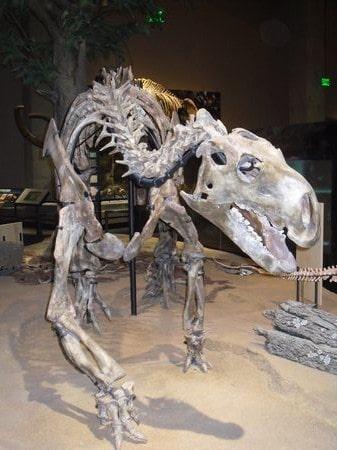 Fossile de Tenontosaurus.