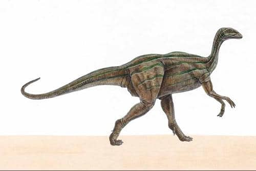 Thecodontosaurus.