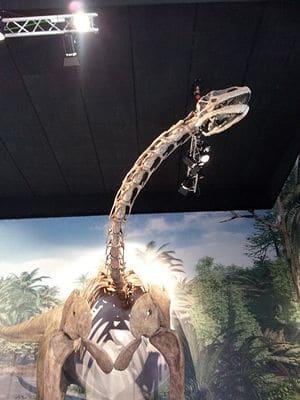 Dinosaure Turiasaurus.