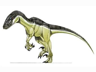 Le dinosaure Variraptor, ancienne représentation sans plumes.