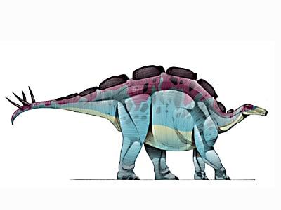 wuerhosaurus.